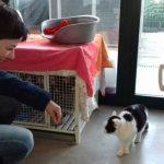 Milano gattile comunale: spazio ai felini più difficili