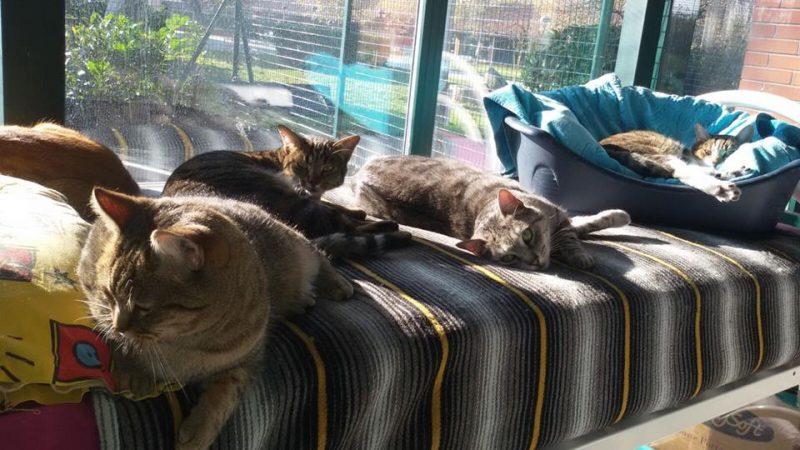 Milano gattile comunale