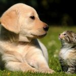 I migliori blog sugli animali domestici: ecco quali consultare