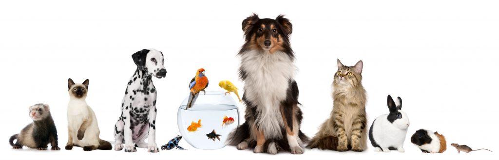 migliori blog animali