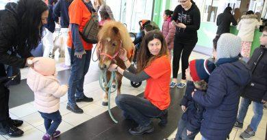 Milano il pony in corsia