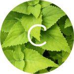 Per dimagrire i milanesi usano Garcinia Cambogia, Coleus Forskholii e Caffé Verde