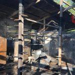 Incendio nel gattile di Rho: morti tutti i gatti