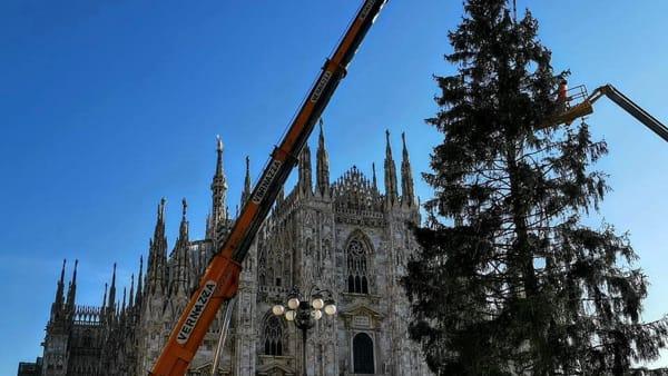Albero di Natale in piazza Duomo