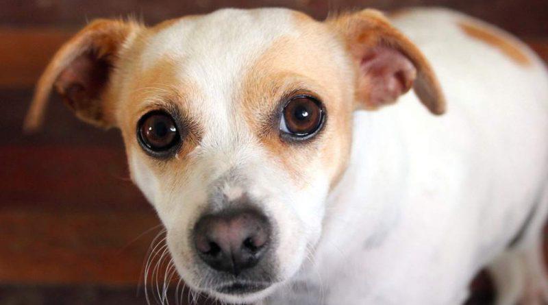 cane perfetto per te