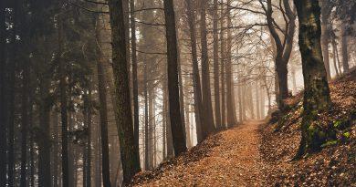 Sviluppo e promozione del settore forestale lombardo