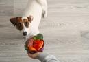 Qual è la giusta alimentazione per il cane adulto?