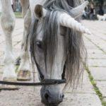 Unicorno al Parco Sempione: bambini in fila per accarezzarlo