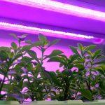 Coltivare con il LED per avere cibi più sani e nutrienti