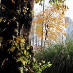 Contatore ambientale: Milano vince premio sviluppo sostenibile 2019