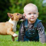 Babysitter Milano: a chi affidare i propri figli