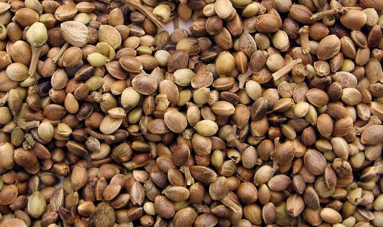 Come acquistare i semi di cannabis