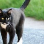 Selezione cromatica tra i gatti: ecco come è avvenuta