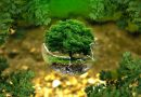 Salvaguardia ambientale