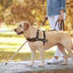 Da Regione Lombardia 318 mila euro per l'addestramento dei guide dog
