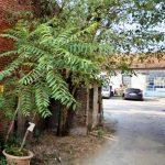 Cascina Corte San Giacomo: bando per la locazione aperto fino al 20 gennaio
