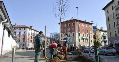 Otto liriodendri in piazzale Ferrara grazie al Patto di collaborazione