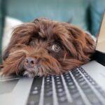 Smart working: tra gli aspetti negativi l'allungamento dei tempi di lavoro