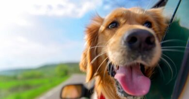 cane viaggio